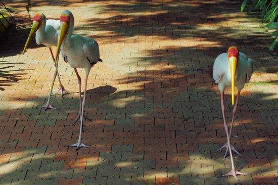 Kuala Lumpur Bird Park : Passersby