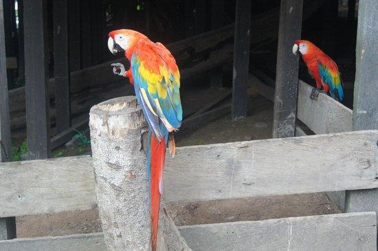 Reserva Natural Marasha : Macaw in Marasha