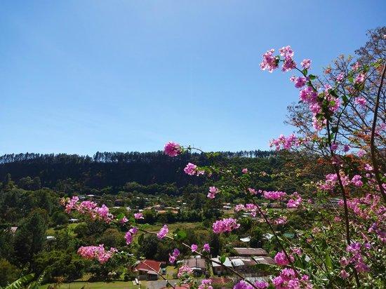 Casa Pedro: view
