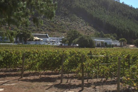 Franschhoek Wine Tram: Rickety bridge winery