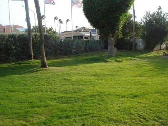 Bucuti & Tara Beach Resort Aruba: No parking lot, just bushes, not bad at all