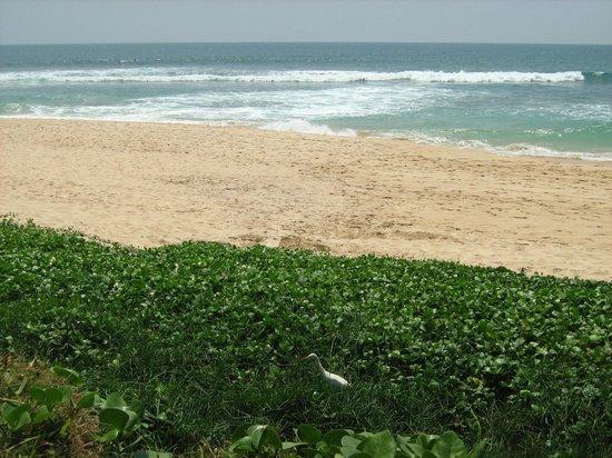 Club Koggala Village : пляж