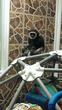 Zoological Wildlife Foundation: she stole my sunglasses