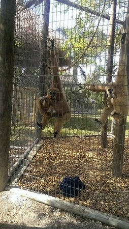 Zoological Wildlife Foundation: Just hanging out