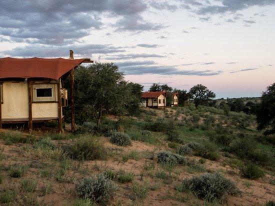 Kalahari Tented Camp: Khalagadi tented camp