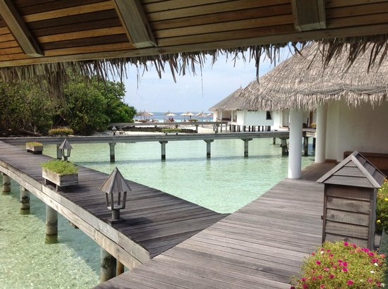 Gangehi Island Resort: Blick von der Haustür zur Insel