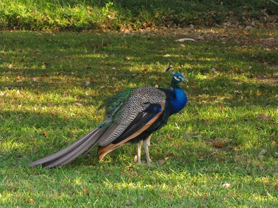Butler Greenwood Plantation: Beautiful free pets while you stay at Butler-Greenwood