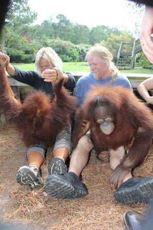 OMG Orangutans!!!! - Picture of Myrtle Beach Safari
