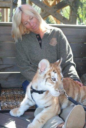 Myrtle Beach Tiger Safari Reviews