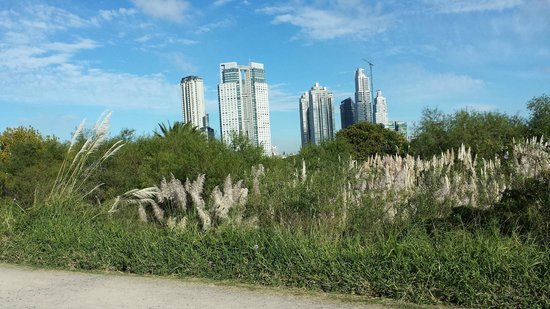 Hilton Buenos Aires: View from Nearby Ecological Reserve