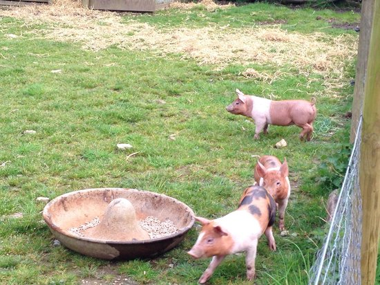 Ruthern Valley Holidays: 3 little pigs