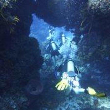 ScubaTony Cozumel: Cave Pillars