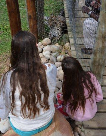 Tenikwa Wildlife Awareness Centre: Leopard enclosure