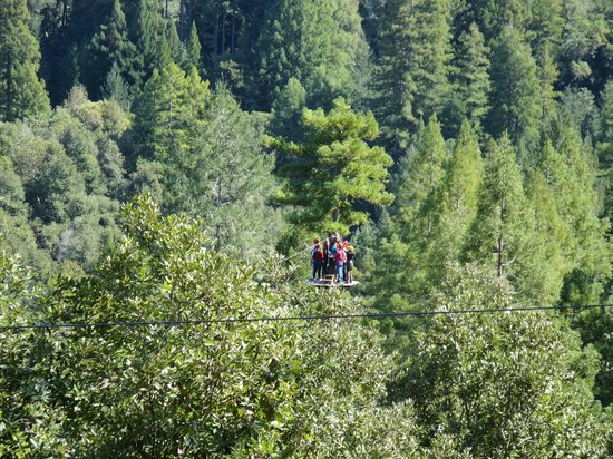 Sonoma Canopy Tours: Tree Top Perch