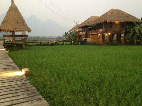Vieng Tara Villa : Rice fields