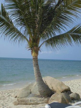 Centara Villas Samui: great beach