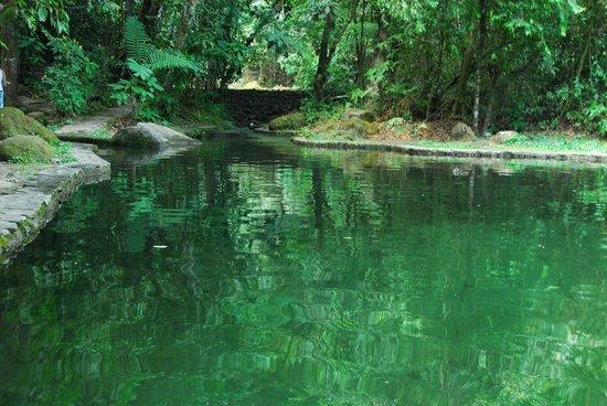 Park Eden Bed & Beakfast : piscine naturelle