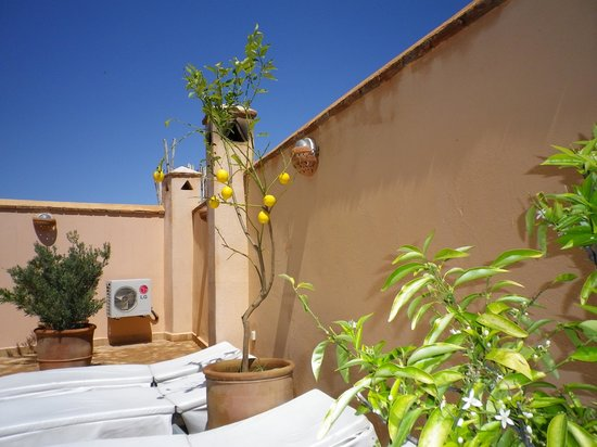 Riad Limouna: Roof Terrace