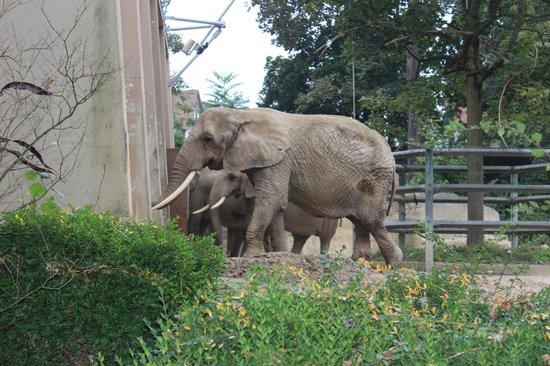 Zoo Basel : Слоники
