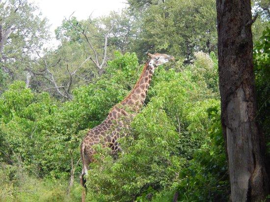 Wilderness Safaris Kings Pool Camp: Encountered Friend