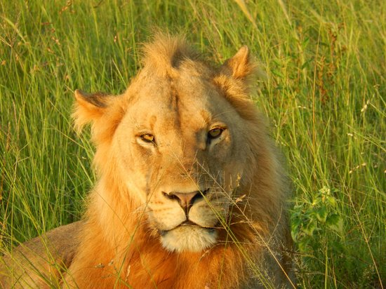Wilderness Safaris Kings Pool Camp: Another Friend