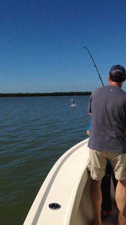 Fins N Grins Charter Fishing: Tarpon on the line