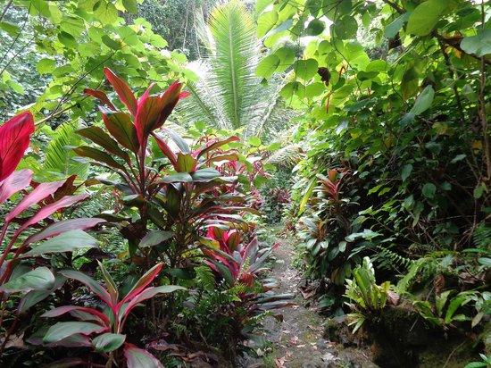 Kepirohi Waterfall : Jungle way to waterfall