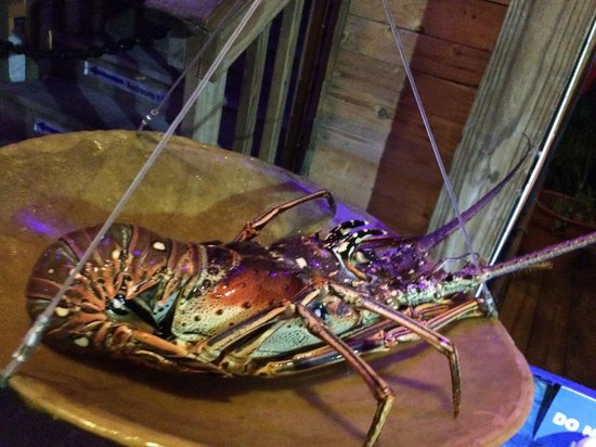 Lee's Roadside Grill: Weighing the lobster