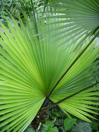 Palmengarten und Botanischer Garten: Great selection of plants