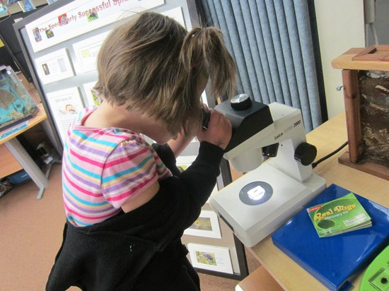 Grand Junction, CO: Exploring insects through the microscope
