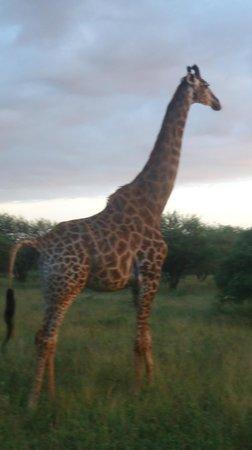 Elandela Private Game Reserve: Nature beautys