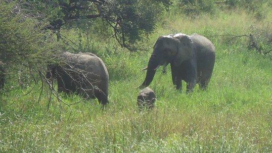 Elandela Private Game Reserve: The Kruger
