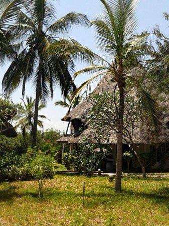 Temple Point Resort: Chalets  – Bungalows Stil