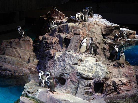 New England Aquarium : penguins
