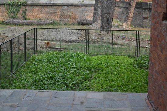 Gokarna Forest Resort: Home grown veggies