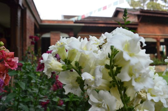 Gokarna Forest Resort: Beautiful Flower