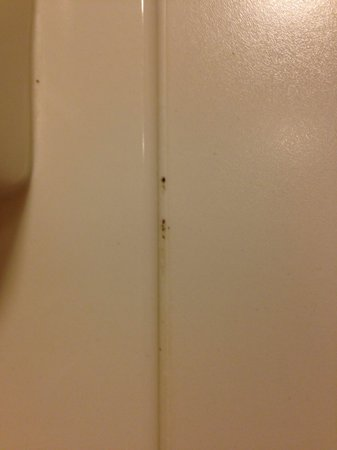 Hampton Inn & Suites Outer Banks/ Corolla: Shower mold in a renovated room