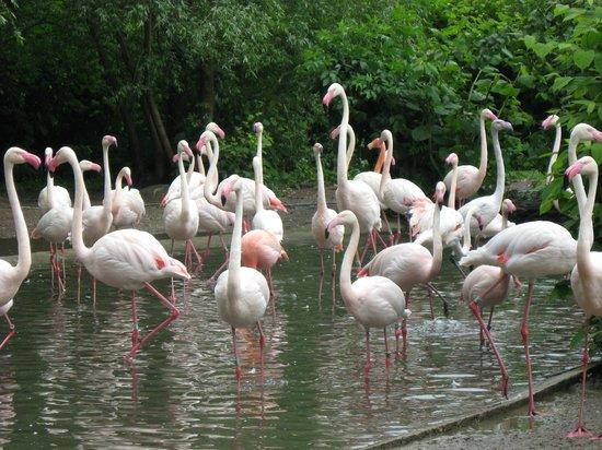 Prague Zoo : Розовые фламинго
