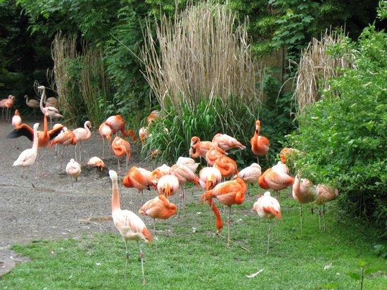 Prague Zoo : Почти красные фламинго