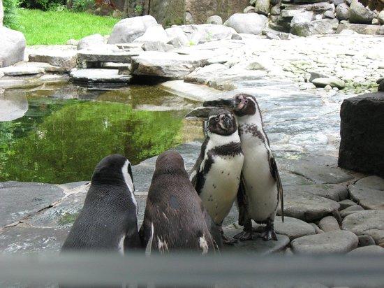 Prague Zoo : Сладкая парочка!
