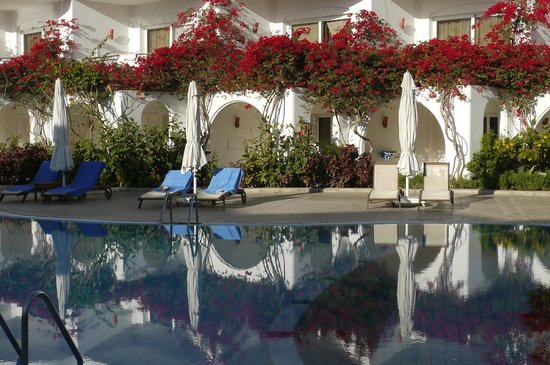 Iberotel Palace : Poolside reflections