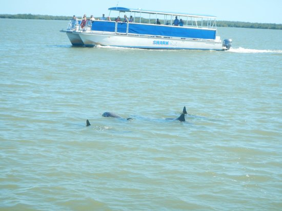 Everglades National Park Boat Tours: Pod of dolphins that followed our boat