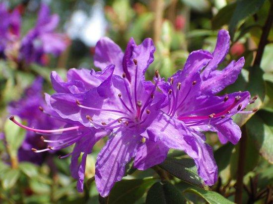 Piazza Ascona Hotel & Restaurants: Prächtige Blumen die mann überall sieht