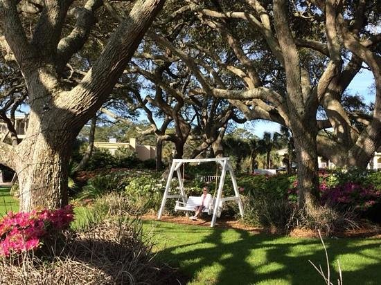 The Beachview Club : swinging under the trees