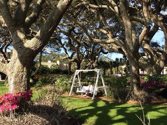 The Beachview Club: swinging under the trees