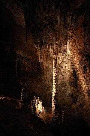 Marakoopa Cave: Palm Tree