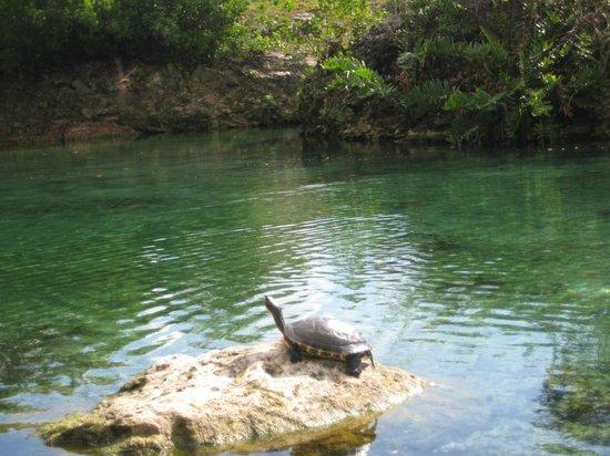 Fairmont Mayakoba: Nature boat tour