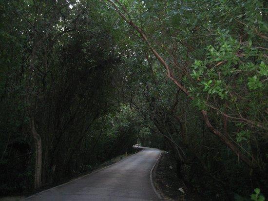 Fairmont Mayakoba: Road to the beach