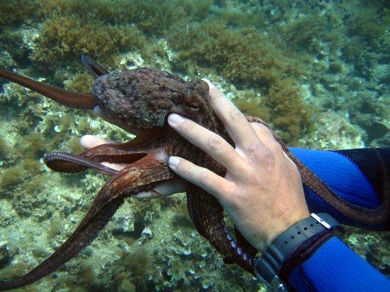Paradise Dive Center: octupus