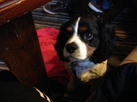 The Inn at Cranborne: Kacy hoping my dinner will drop on the floor